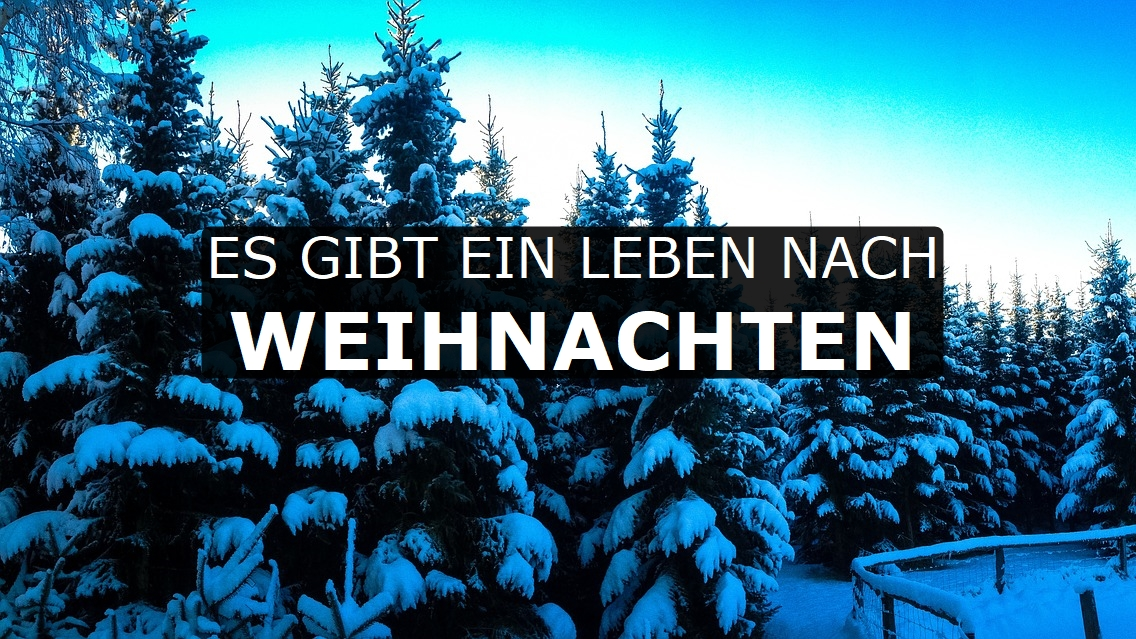Warum Gibt Es Weihnachten.Grüne Weihnachten Mit Einem Lebenden Weihnachtsbaum Feiern