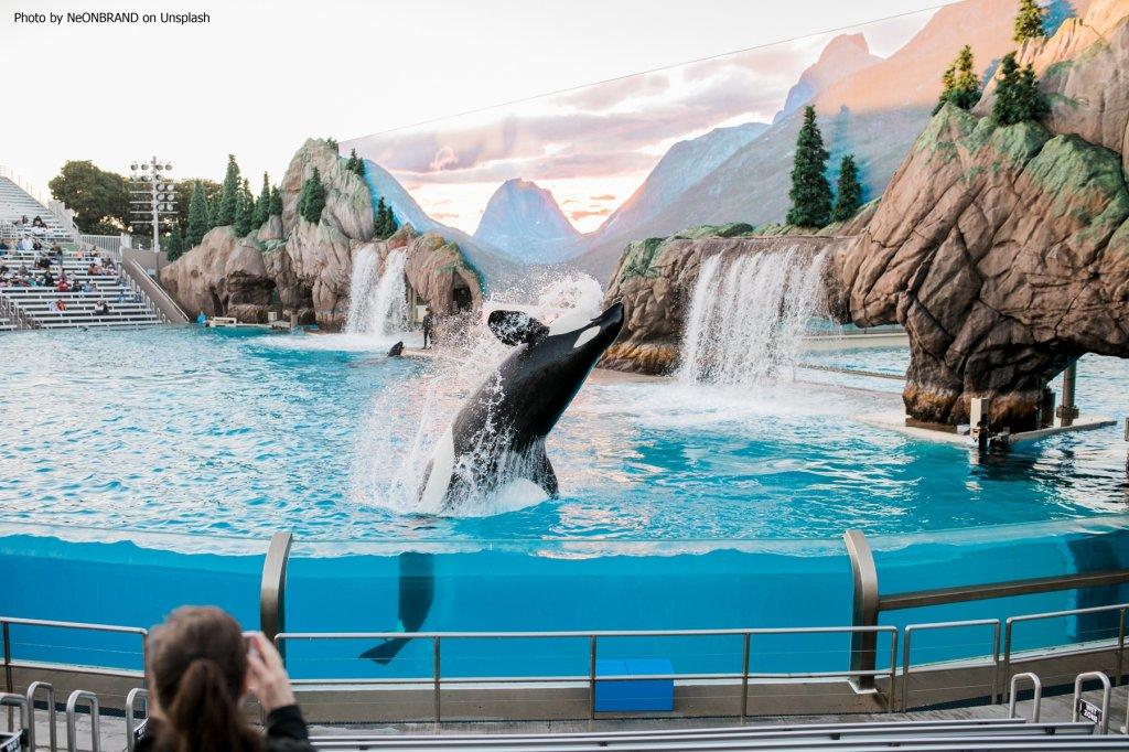 Umweltrevolution – Kanada verabschiedet Gesetz zum Verbot von Walen und Delfinen in Gefangenschaft