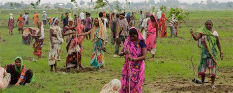 Neuer Weltrekord: Inder pflanzen 66 Millionen Bäume in nur 12 Stunden