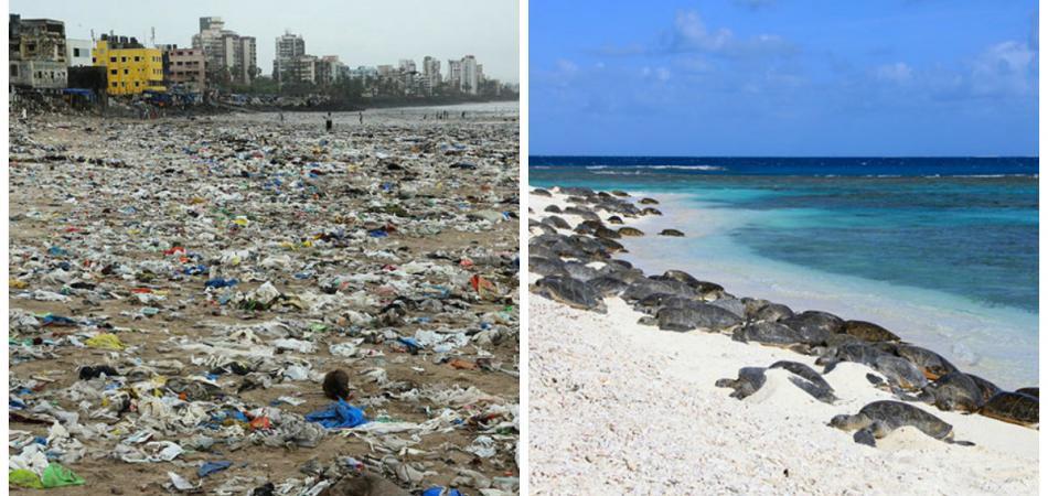 Gefährdete Schildkröten kehren nach 20 Jahren an Mumbais Strand zurück
