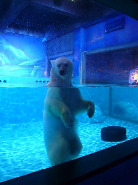 Der traurigste Eisbär der Welt im Einkaufszentrum