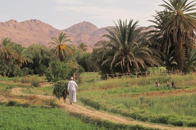 Wenn aus Wüsten Gärten werden