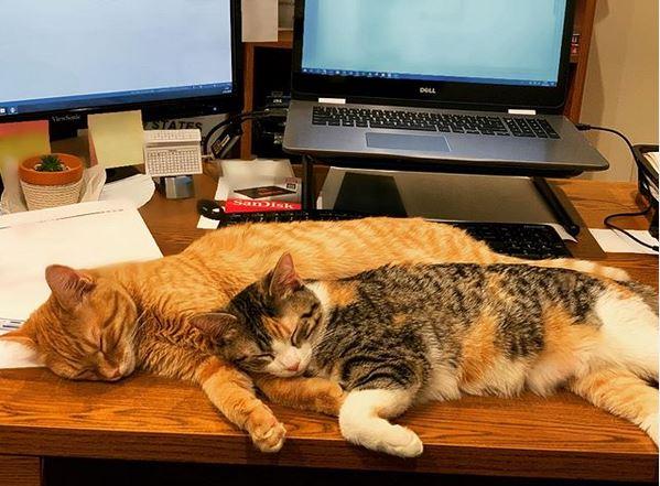 Unternehmen adoptiert Kätzchen gegen Stress im Büro