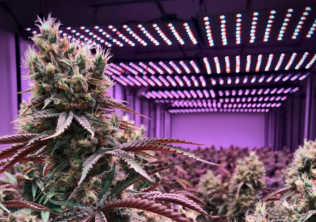 Kostenloses medizinisches Cannabis für Patienten in Sizilien