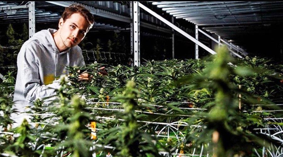 Cannerald Cannergrow cannabis cbd invest geld verdienen finanzen markt cbd